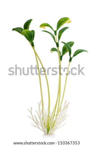 Nature concept - Seedlings on white - stock photo