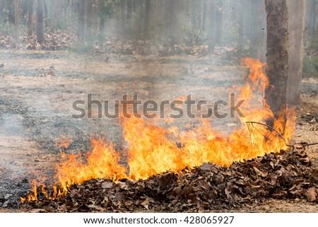 nature disaster - stock photo