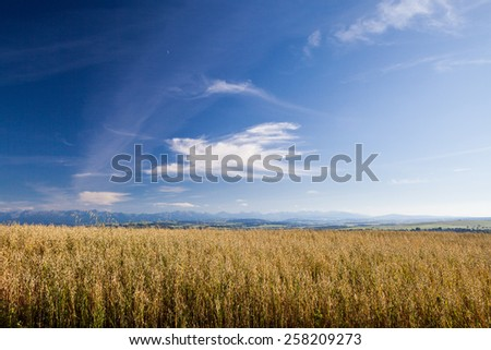 Nature fields in south Poland with view to Slovak Tatra Mountains in summer  - stock photo