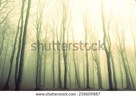 Nature. Fog in dark forest. Vintage instagram picture - stock photo