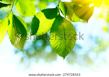 Nature green leaves background. Abstract blurred summer green lush bokeh. Defocused leaves with sunflare outdoor backdrop - stock photo