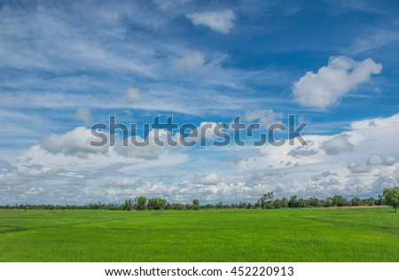Nature green  paddy rice field,the beautiful sky, and cloud,local farmer practice in the afternoon  in Thailand. ( By the soft blurred and soft focus .) - stock photo