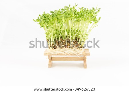 nature green sprout growing from seed   on wooden in white background - stock photo