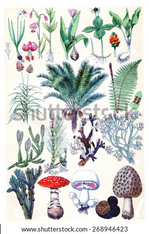 Nature herbs, plants and mushroom, vintage engraved illustration. La Vie dans la nature, 1890.  - stock photo