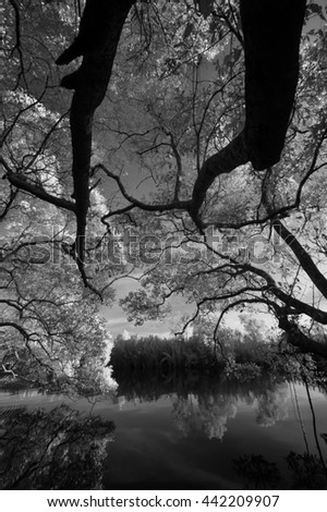 Nature in monochrome, black and white infrared photography  - stock photo