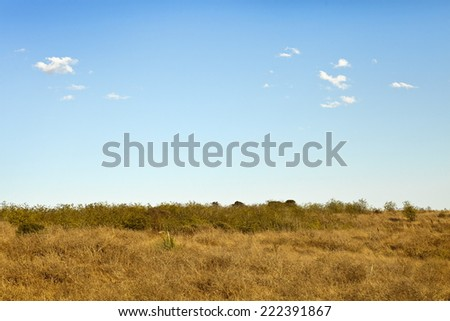 Nature landscape background with blue sky and yellow grass on the ground, fall background - stock photo