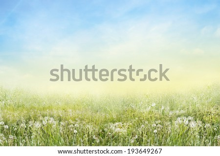 Nature Landscape of green meadow with white dandelions and sunny sky - stock photo
