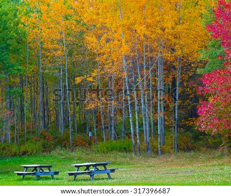 Nature landscape, Trees changing colors during autumn in a forest park with benches, rural Pennsylvania Poconos Mountains - stock photo