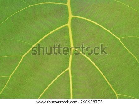 Nature Leaf texture - stock photo