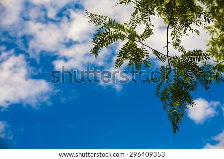 nature leaves sky beautiful view - stock photo