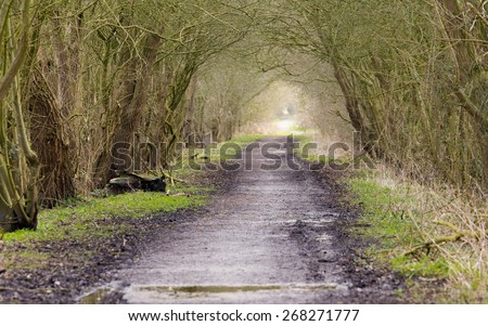 Nature nature trail tunnel - stock photo