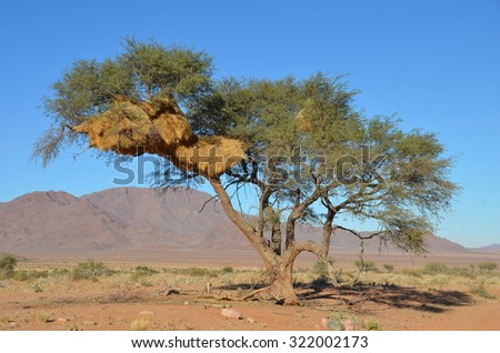 Nature of Namib Desert, Namibia, Africa - stock photo