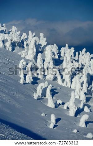 nature of winter - stock photo
