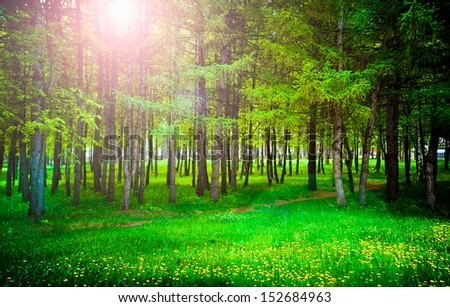 Nature, park, tree - stock photo