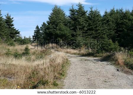 nature path - stock photo