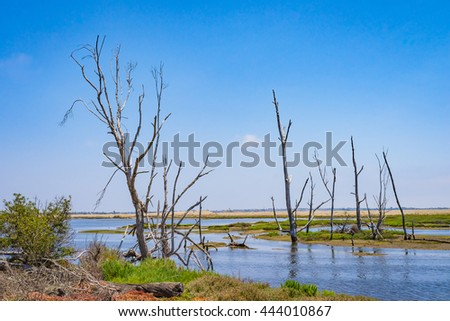Nature preserve located in the wetlands of Huntington Beach in southern California. - stock photo