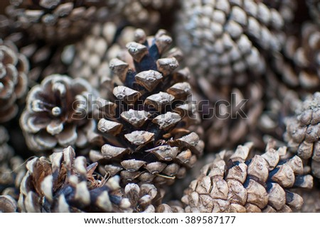 Nature products - pine cone texture - stock photo
