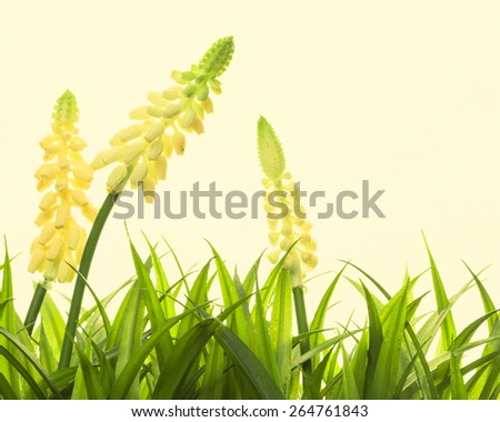 Nature spring or summer background. Vintage style - stock photo