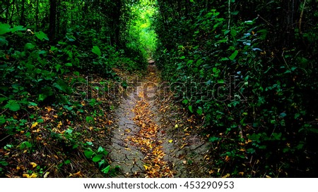 nature trail in the woods.mystical forest path - stock photo