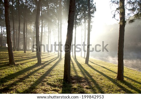 Nature trees at the small lake in the morning, Thailand. - stock photo