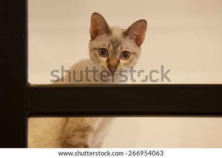 Naughty Cute Cat playing at the Ladder - stock photo
