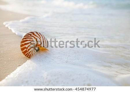 nautilus shell on white beach sand, against sea waves, shallow dof, soft focus - stock photo