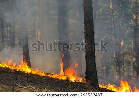 Near Kiev, Ukraine -April 11, 2015: Severe drought. Fires destroy forest and steppe. April 11, 2015 Near Kiev, Ukraine. - stock photo