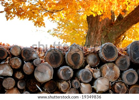 Neatly stacked pile of logs resting under a tree in late Autumn - stock photo