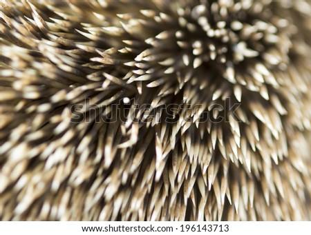 needle hedgehog texture - stock photo