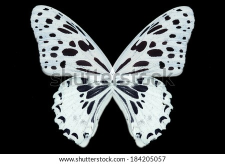 negative butterfly wings isolated - stock photo