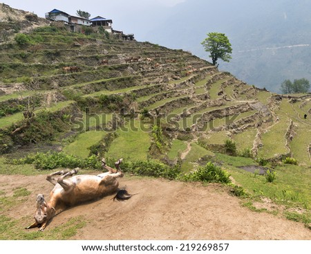 Nepal, Himalayas. - stock photo