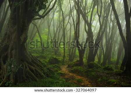 Nepal jungle fog - stock photo