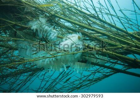 nest for squid egg - stock photo