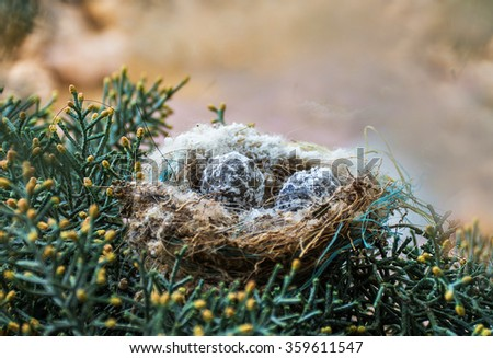 Nest in pine Christmas with two eggs - stock photo
