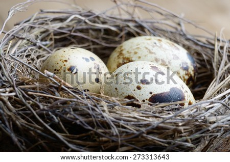 Nest with quail eggs on the wooden background - stock photo