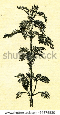"""nettle - an illustration from the book """"In the wake of Robinson Crusoe"""", Moscow, USSR, 1946. Artist Petr Pastukhov - stock photo"""