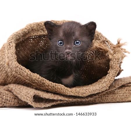 New born Cat in Burlap Bag - stock photo