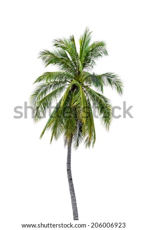 New coconut tree isolate on white - stock photo