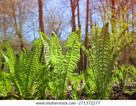 new ferns growing in spring - stock photo