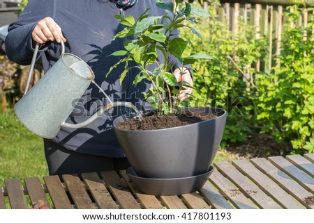 new flower is poured with an old watering can - stock photo