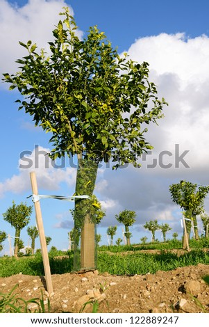 new fruit trees over cloud sky - stock photo