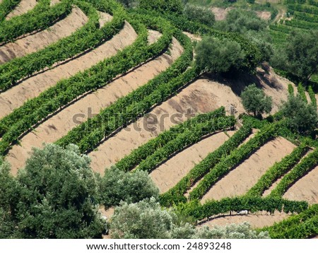 New generation terraced vineyards - stock photo