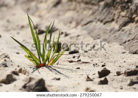 New green grass breaks through the sand - stock photo