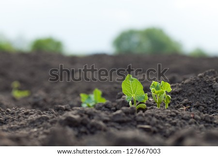 new green sprouts growing - stock photo