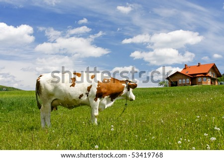 New house and cow on green field - stock photo