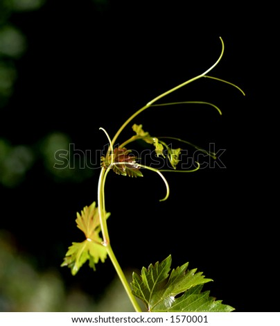 new leaves... - stock photo