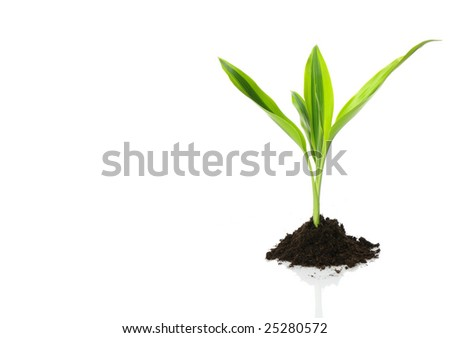 New Life (growth concept) - stock photo