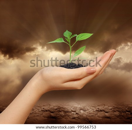 New life in hand over drought land - stock photo