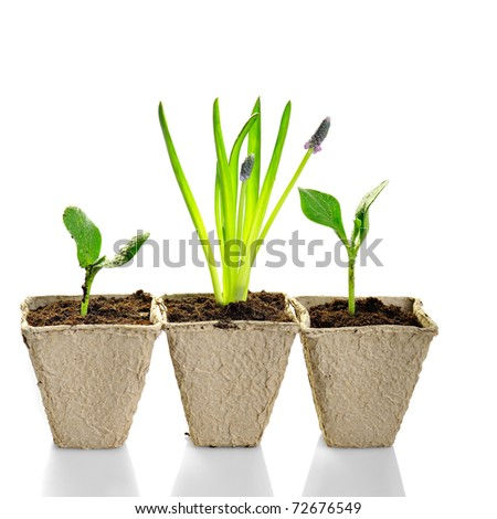new life: little plant in pot isolated on white background - stock photo
