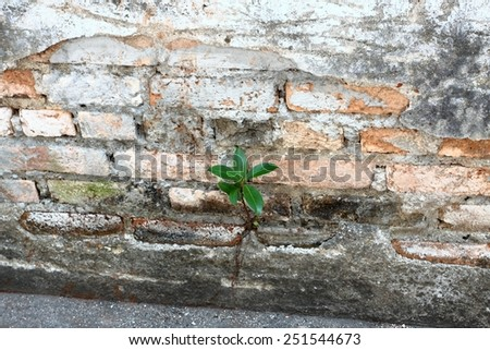 New life, plant growing in the wall as a concept of the strong future - stock photo